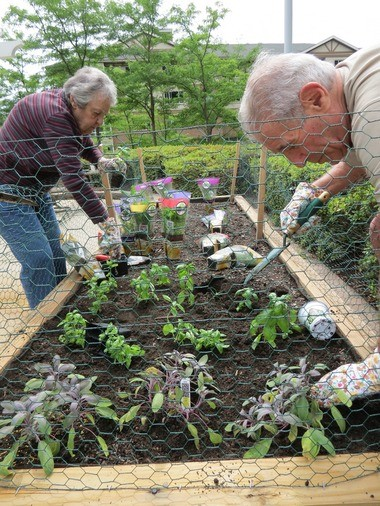 Cedar Crest residents Marilyn Goldstein, left, and Don Weintraub plant herbs in the community's second herb garden in Pequannock Township.