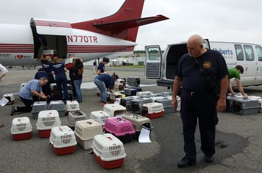 "The 133 dogs arrived at Morristown Airport through a California based organization ""Wings of Rescue."""