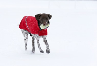 Sash plays in the snow at Tamaques Park in Westfield this morning.