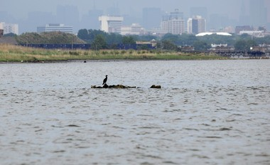 Pictured, a bird in the polluted Passaic River looking east towards Jersey City on June 1, 2007. (File photo)