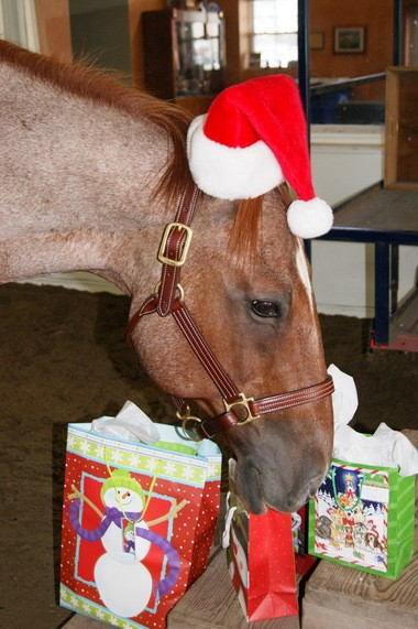 George, a Centenary lesson horse who doubles as a therapeutic mount, is the December pin-up playing Santa in the TRAC calendar.