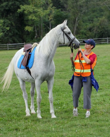 Friends member Norma Molyneaux with Presto, volunteering at the hunter pace.