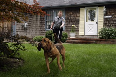 """Ocean County Sheriff's Officer John Adams and his Bloodhound """"Cooper"""" search the front yard of a home in Dover on June 11, 2004. (Matt Rainey 