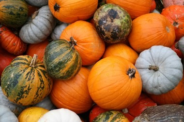 Weekends abound with fun-filled, festive fall events throughout the Garden State.