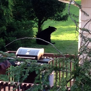 Mike Ryan, a West Milford resident, said this bear visited his neighborhood on Northwood Drive, Sept. 20, 2014. (Courtesy of Mike Ryan)