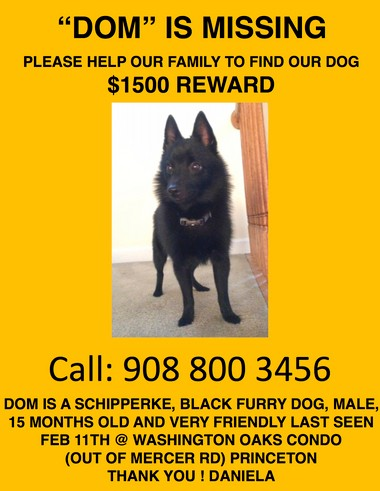 884c771f285 A lost dog & flyers worth another look - nj.com