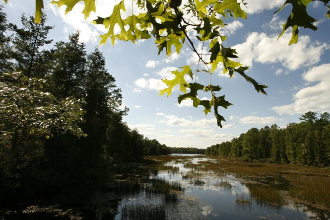 A view of the Pine Barrens view from Bass River State Forest. (Andrew Mills | Star-Ledger file photo)