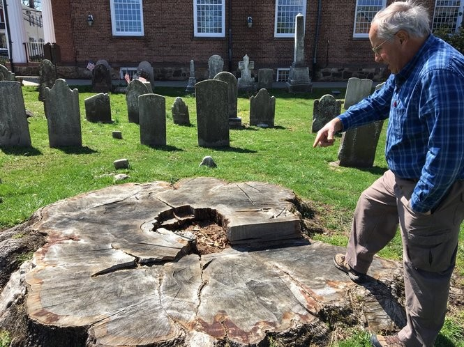 Thomas Ombrello, biology professor at Union County College, points toward the stump of a 619-year-old oak tree that was cut down in 2017, on the grounds of the Basking Ridge Presbyterian Church in Basking Ridge, April 18, 2018