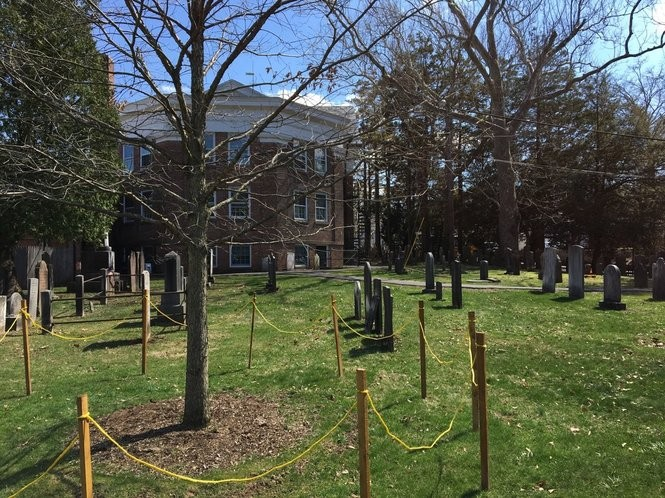 Wooden posts and a yellow rope safeguard the young white oak tree at Basking Ridge Presbyterian Church in Basking Ridge, April 18, 2018