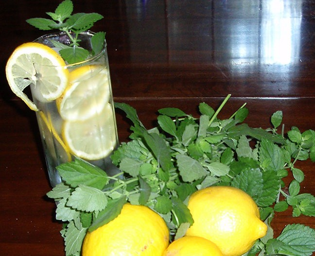Lemon balm and other perennials will grow all winter and often can be harvested unless there has been a hard freeze.