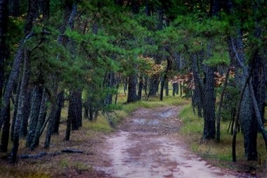 """Pathway Along Batona Trail"" is one of Richard Speedy's photographs in the exhibit ""The Pine Barrens: A Legacy of Preservation"" at Morven Museum and Gardens in Princeton."