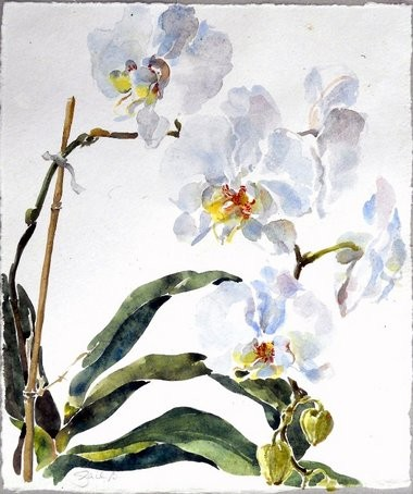 """Phanenopsis White"", watercolor, by Gail Bracegirdle."