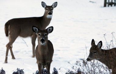 Union County will begin the annual deer population control program next month with 36 hunters selected to go into the Watchung Reservation and around Lenape and Nomahegan parks.