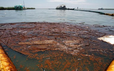 Oil collects in a boom at Pass a Loutre on June 11, 2010.