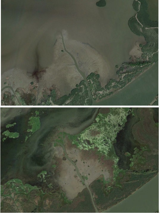 These satellite images of the Mississippi River Delta east of Cubit's Gap show land growth between 2012 and 2016.