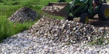 Galveston Bay Foundation's oyster shell recycling program cures oyster shells for a minimum of six months in the sun at a site in City Lake, Texas.
