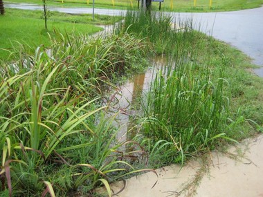 Rain gardens capture water before it enters the city's drainage system. The vegetation helps clean the water of contaminants, and holds it long enough to percolate into the ground.