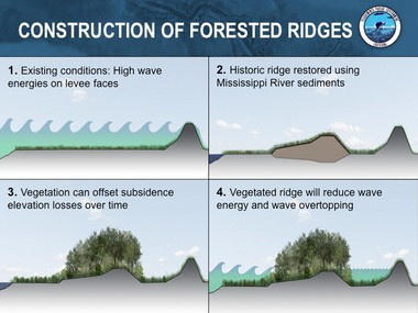 Parish officials believe forested ridges can help reduce the size of hurricane storm surges, adding protection outside existing and proposed levees that might reduce flood insurance prices for residents.