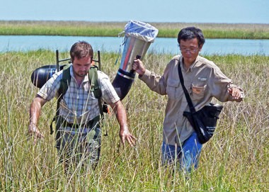 LSU doctoral entomology student Xuan Chen, right, and former student Max Adams use a vacuum collector to capture insects in a Louisiana marsh.