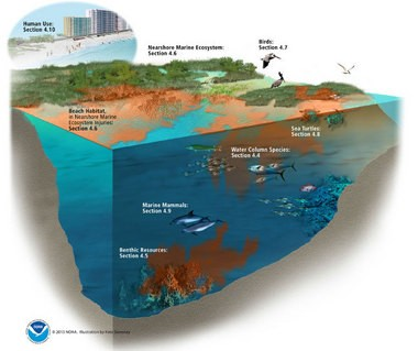 A graphic from the Damage Assessment and Restoration Plan outlines the different focuses of the restoration program, including nearshore marine ecosystem, beach habitat, human uses, birds, sea turtles, species living in the Gulf water column, marine mammals and benthic resources living on the Gulf bottom.