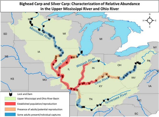 Bighead and Silver Carp Relative Abundance in the Upper Mississippi River and Ohio River. (Graphic by Asian Carp Regional Coordinating Committee)