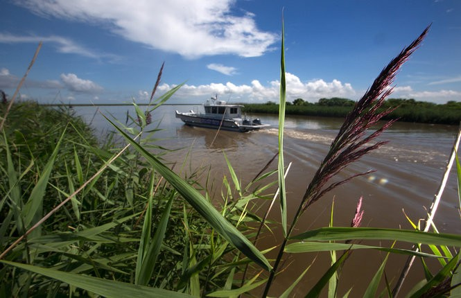 A boat passes roseau cane in Delta National Wildlife Refuge south of Venice in June 2017.