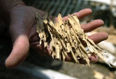 Once they gain access to a house, termites can easily chew through solid wood, shredding it like this piece of a door.
