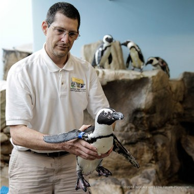 Aviculturist Darwin Long at the Audubon Aquarium of the Americas catches Ernie for and eye examination Tuesday, June 3, 2014. Ernie has cataracts. (Photo by David Grunfeld, NOLA.com   The Times-Picayune)