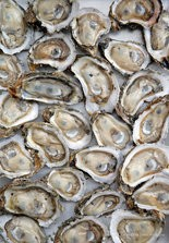 Raw oysters. (Photo by David Grunfeld, NOLA.com | The Times-Picayune)