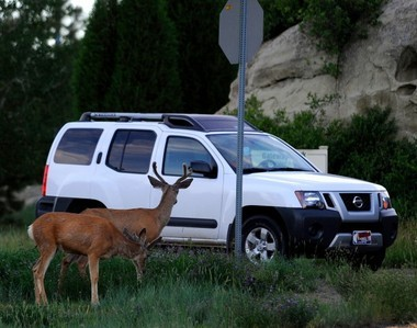 Montana's roadkill salvage permits turn a year old this month, and use of the system hit more than 800, with Flathead County leading the state for issuance.