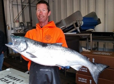 Clark Von Essen of Ilwaco, Wash., handled a 26-pound chinook salmon (dressed weight) this past week at Ilwaco Landing. The fish was caught by a commercial troller a few miles north of Newport, Ore., in 200 feet of water.
