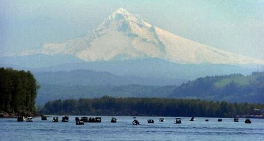 Anglers face one of the most complicated summer and fall fishing seasons ever on the lower Columbia River.
