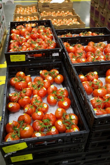 Organic tomatoes await shipment to Fred Meyer stores. Even during the recession, organic food sales grew sharply nationwide to nearly $30 billion.