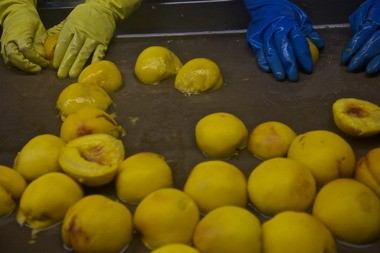 Oregon's farmers rely on fruit and vegetable processing plants.