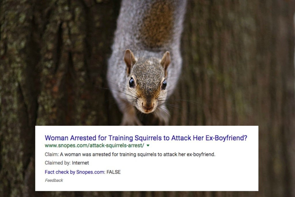 Trains to woman attack squirrels Elderly woman