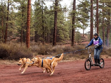 Cascade Sled Dog Club member Lindsay McCann enjoys a scooter ride with her dogs, Parker and Kenna Lu.