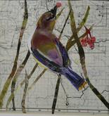 Cedar Wax Wing by Susan Schenk