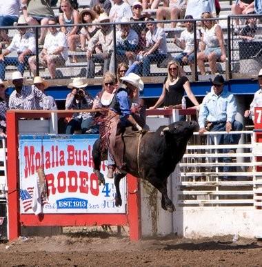 A bull-riding cowboy entertains the crowd at a past Molalla Buckeroo.