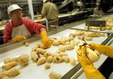 Workers at the Simplot Processing Plant in Hermiston cut the blemishes from freshly washed potatoes. Mohamad Joban inspected the plant and gave it the Halal certificate, which will assure customers abroad that the fries were prepared according to strict Muslim tenets.