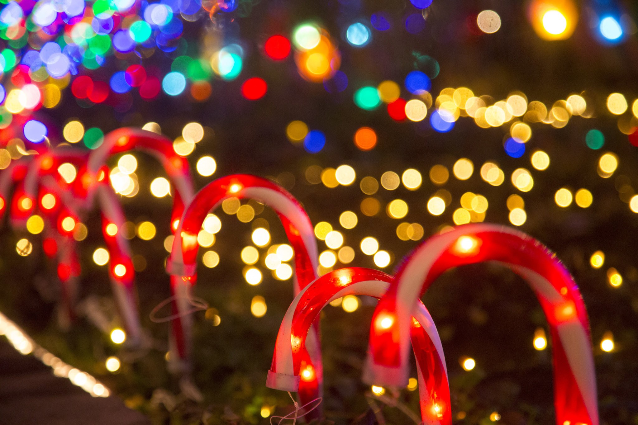 Oregon Gardens Christmas.The 10 Best Holiday Light Displays Around Portland