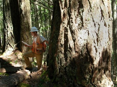 U.S. Forest Service timber planner Jason Herron scouts potential logging locations for the Bybee timber sale in 2010.