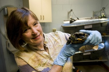 Jane Hartline, volunteer coordinator for the frog rescue, also works on turtle conservation projects.