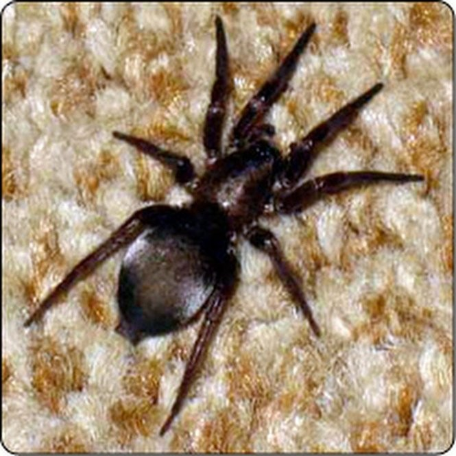 Spiders of Oregon: What's lurking in your home or garden