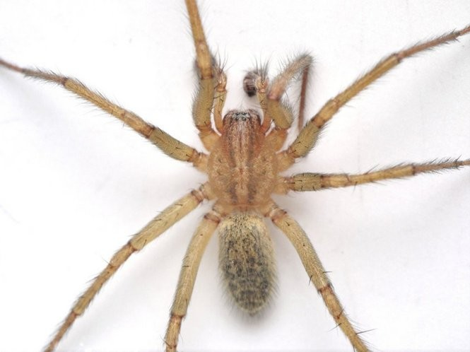 Spiders of Oregon What\u0027s lurking in your home or garden