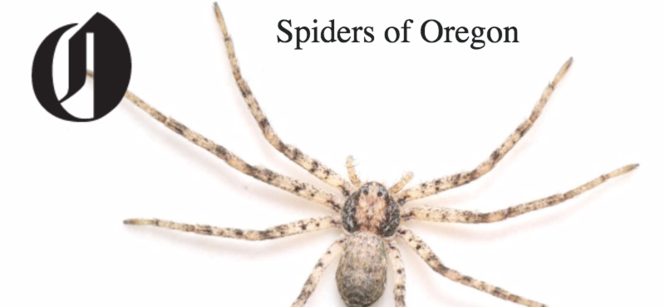 Spiders Of Oregon Whats Lurking In Your Home Or Garden