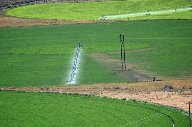 Irrigation pivots paint bright green circles on the Harney Valley's taupe desert floor.