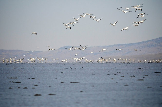State scientists years ago documented their belief that a well-pumping boom in the Harney Valley could be affecting Malheur Lake, a vital stopover for migratory birds. Now, regulators with the Oregon Water Resources Department have clamped down on well development in the valley while they study its impacts on the water table. They plan to include the lake in a five-year analysis of the valley's groundwater system.