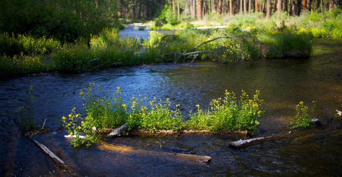 The headwaters of the Metolius River in central Oregon are a few hundred yards away in this July photo.