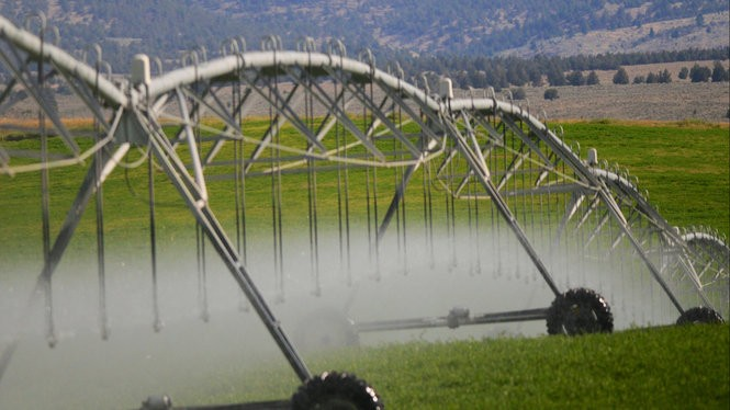 The long tentacles of an irrigation pivot spray water over an alfalfa field.