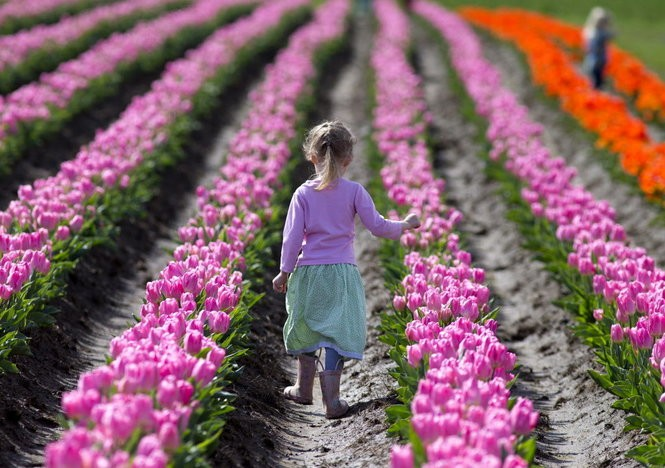 Wooden Shoe Tulip Festival is an annual photographer's paradise at the Wooden Shoe Tulip Farm in Woodburn.